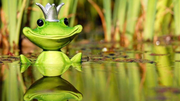 frog-2327915_1920